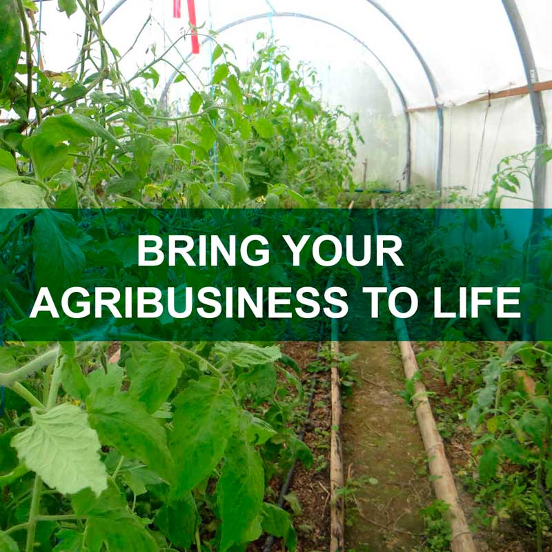 BRING YOUR AGRIBUSINESS TO LIFE